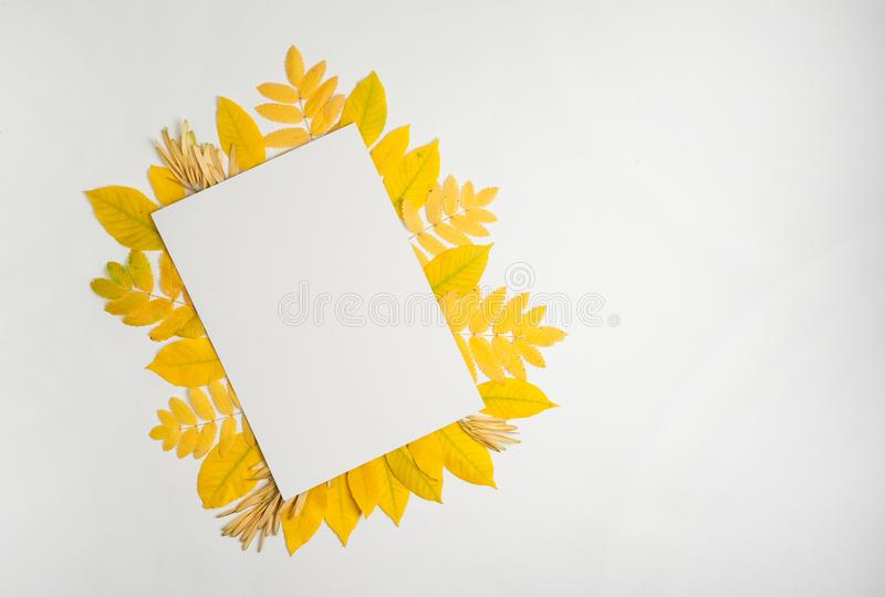 Paper blank, yellow Rowan leaves, maple seeds on a white background. Free space for your text. Autumn composition. Paper blank, yellow Rowan leaves, maple seeds stock images