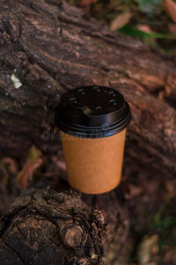 Paper, brown, one-tone and disposable eco-friendly coffee cup to go among autumn foliage and tree bark. royalty free stock photography