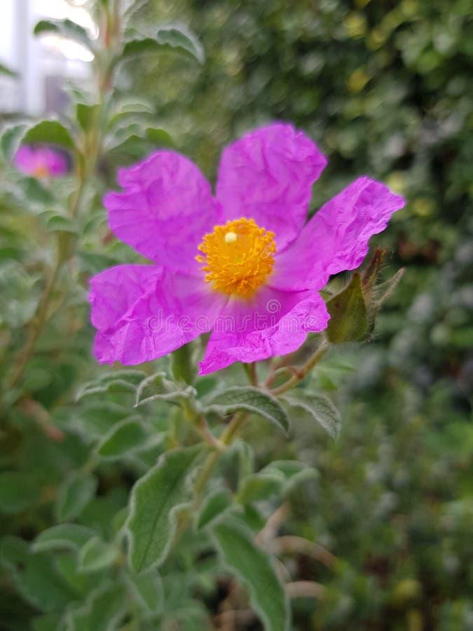 Paper flower stock photo