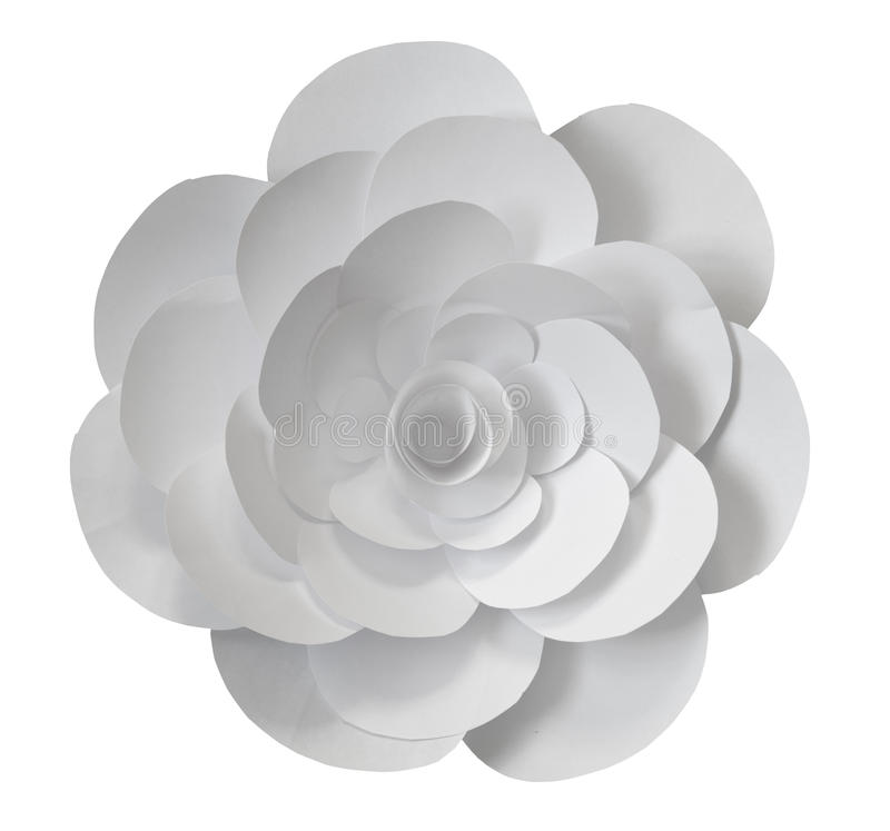 paper foto för härliga blommor mycket royaltyfria bilder