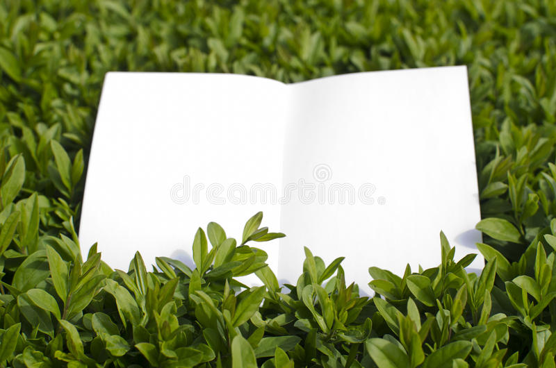 Paper In Green Grass Stock Image