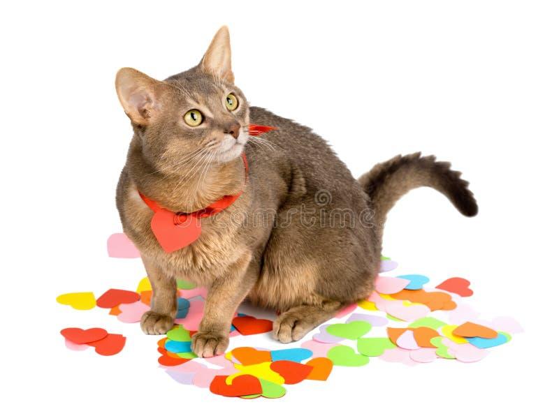 paper sitting för katthjärtor arkivfoton