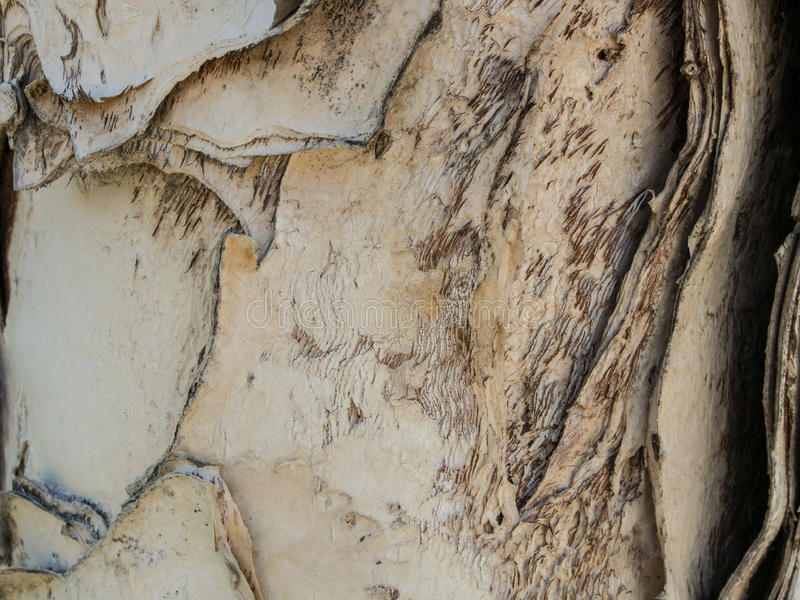 Paper tree bark with designs-5022249 royalty free stock photo