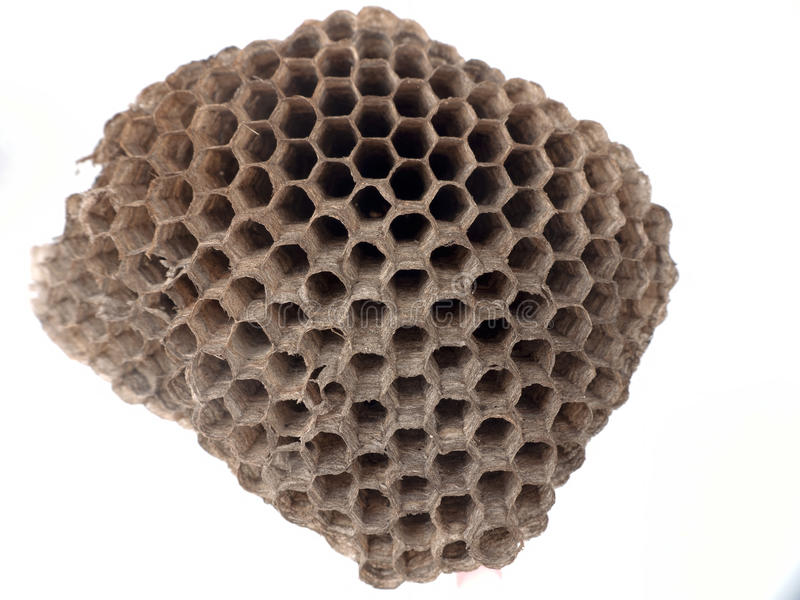 Download Paper wasp nest over white stock photo. Image of gallicus - 25814258