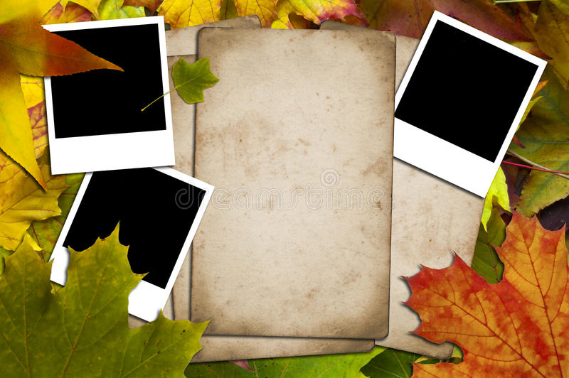 Download Papers And Photos On A Leaves Background Stock Photo - Image: 16773682