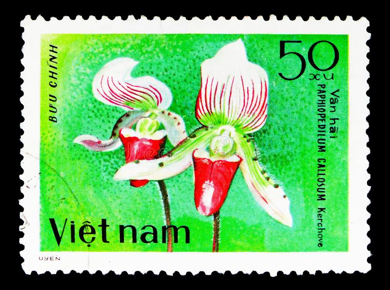 Paphiopedilum callosum, Orchids serie, circa 1979. MOSCOW, RUSSIA - MAY 15, 2018: A stamp printed in Vietnam shows Paphiopedilum callosum, Orchids serie, circa royalty free stock photo