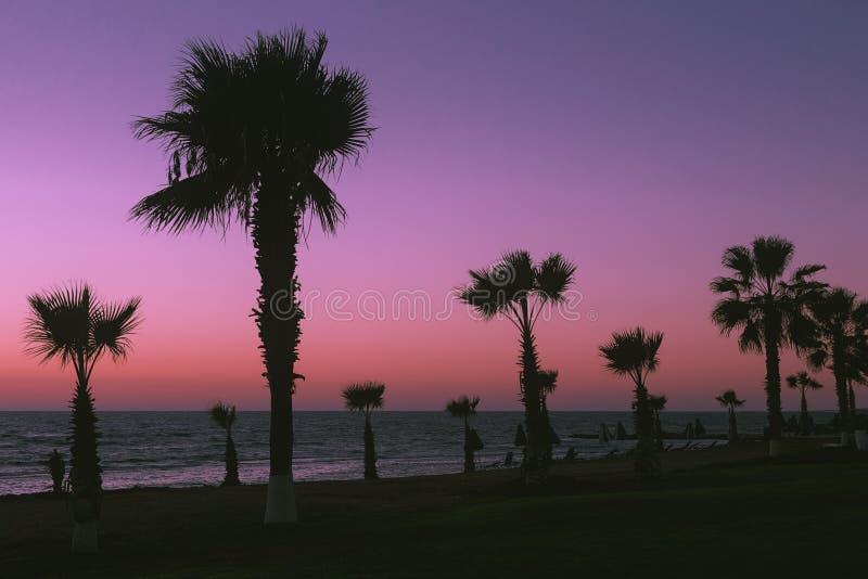 Paphos plaża Piękny zmierzch na tle drzewka palmowe fotografia royalty free
