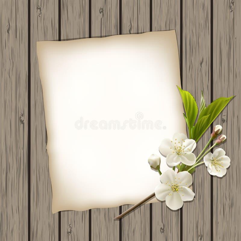 Papier blanc avec la branche se développante de cerise illustration libre de droits
