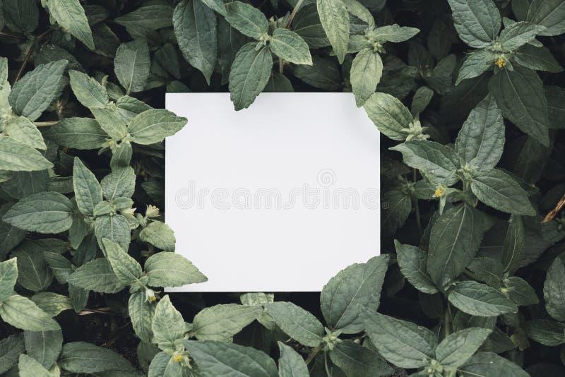 Papier maquillé carte blanche sur feuilles vertes Disposition créative avec concept nature images libres de droits