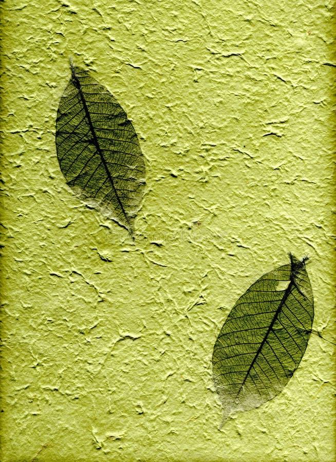Papier normal avec des lames, (résolution de hight) photo stock