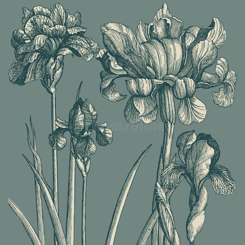Papier peint classique avec une configuration de fleur. Fragme illustration de vecteur