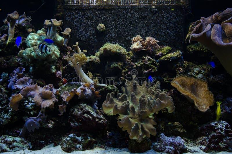 Papier peint d'aquarium image stock