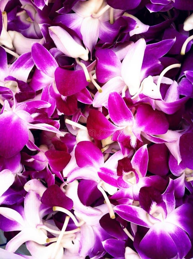 Papier peint d'orchidée photographie stock