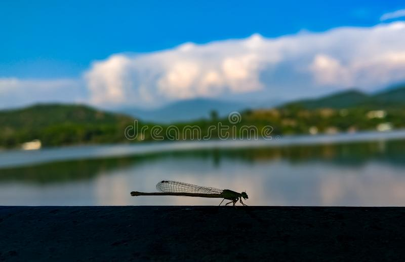 Papier peint de montagne de libellule photographie stock