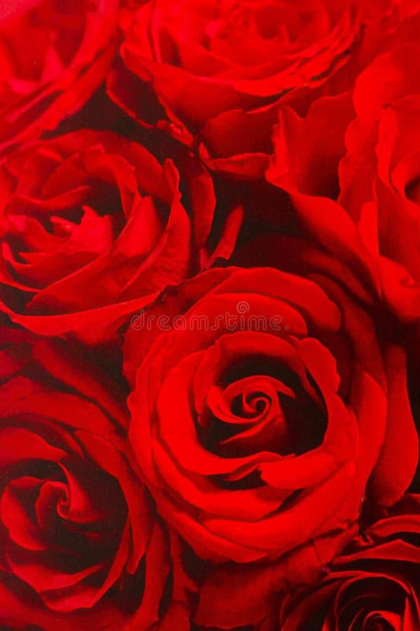 Papier peint de roses rouges photo stock