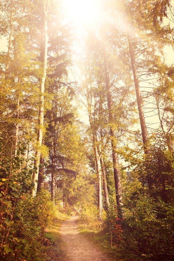 Papier peint de saison d'automne, traînée dans la forêt noire avec le soleil photo libre de droits