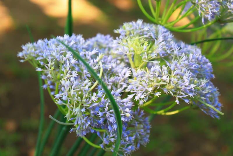 Download Papier Peint De Tache Floue De Fleur Image stock - Image du nature, ressort: 45371011