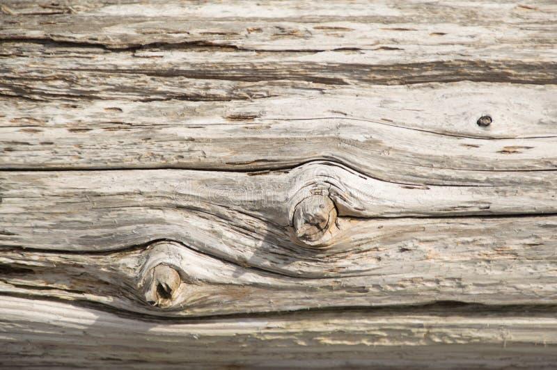 Papier peint en bois superficiel par les agents de fond de bois de charpente argenté de cèdre photos stock