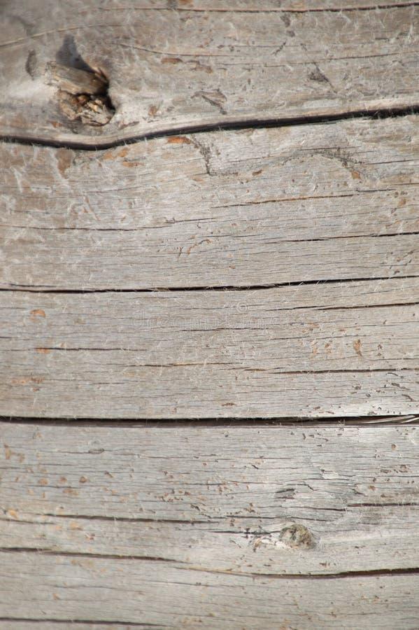 Papier peint en bois superficiel par les agents de fond de bois de charpente argenté de cèdre images stock