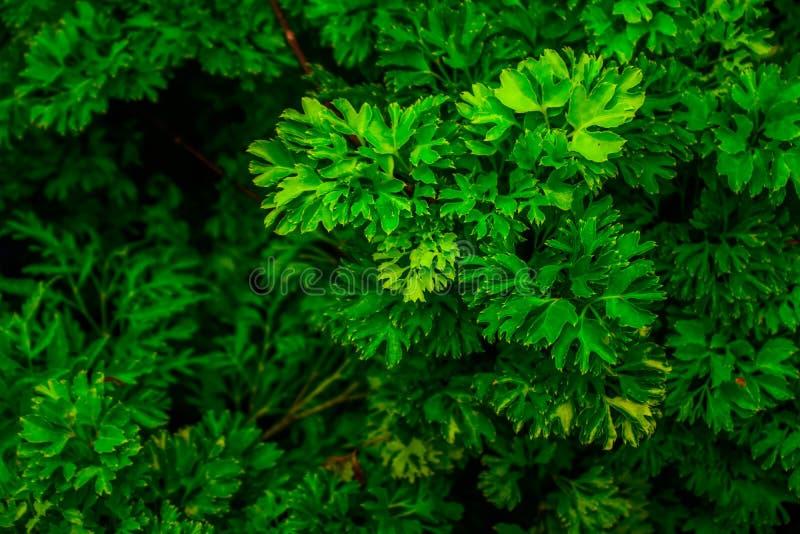 Papier peint vert 1 d'arbre photographie stock