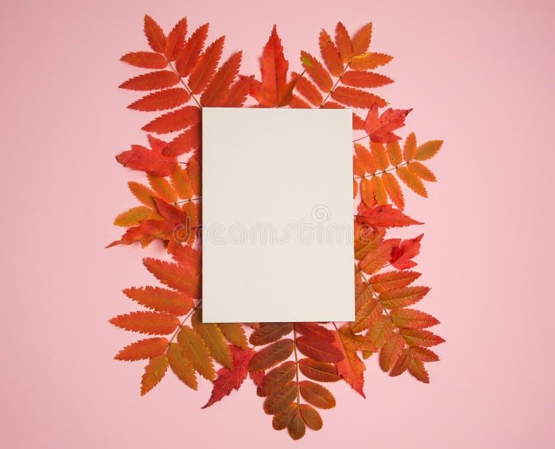 Papier pusty, klon i liści Rowana na różowym tle zdjęcie stock