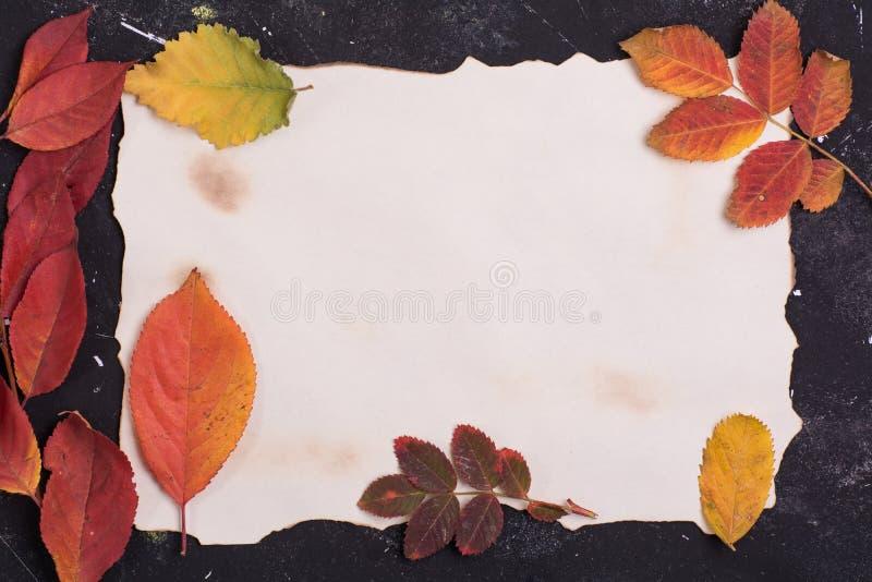 Papier und Feld von den Fallblättern stockfoto