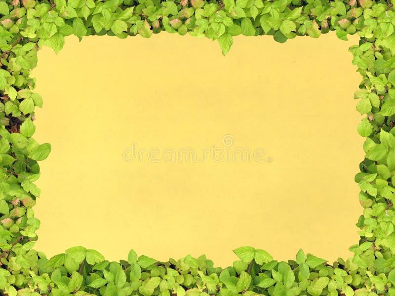 Papier vert de trame image libre de droits