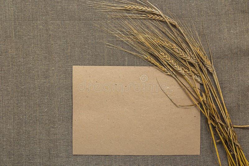 Papier vide avec des épillets de blé image stock