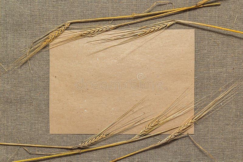 Papier vide avec des épillets de blé photos libres de droits