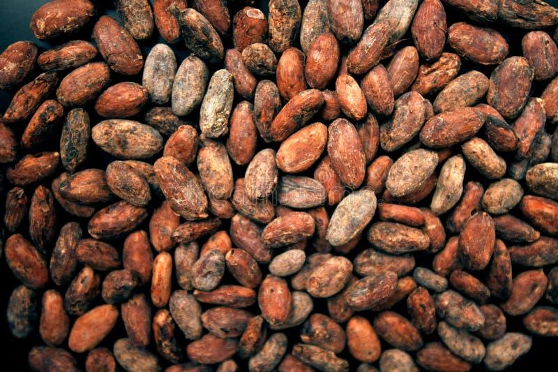 Papier z fasoli kakao, koncepcja niewolnictwa dzieciÄ™cego obrazy royalty free