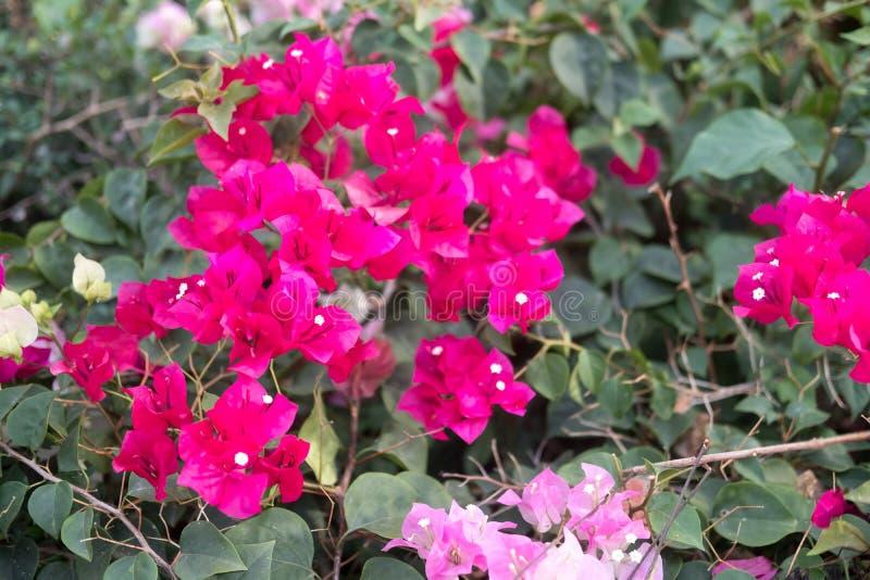 Papierblume im Garten stockfotos