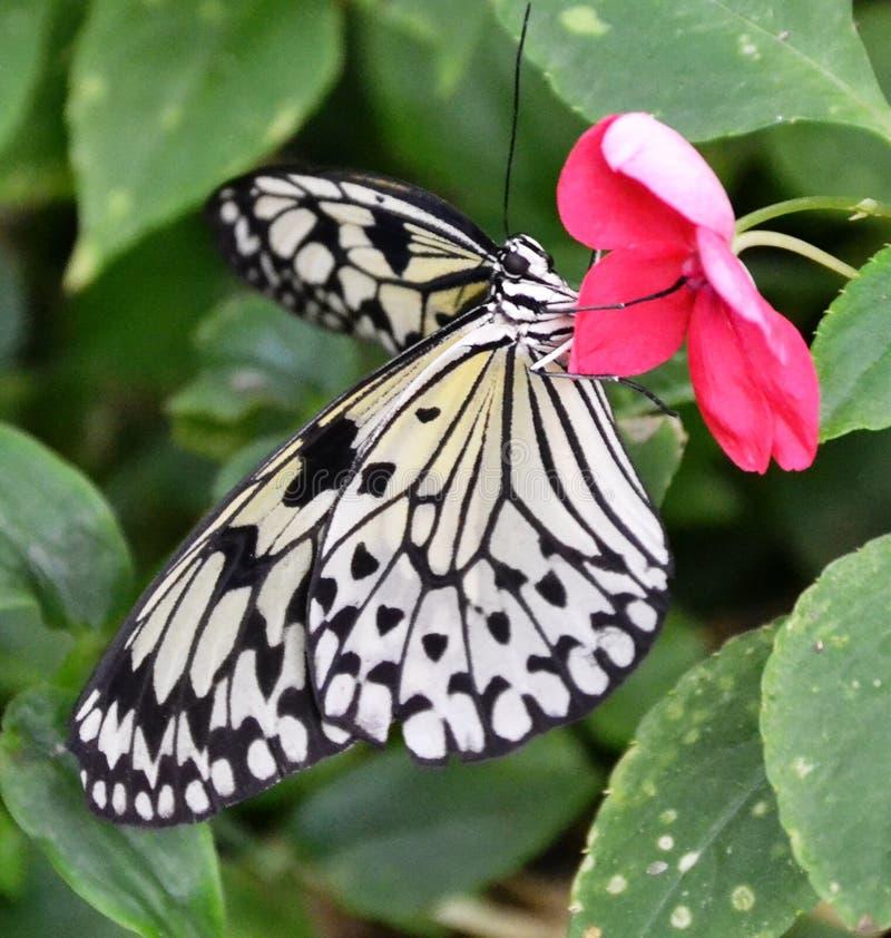 Papierdrachen-Schmetterling stockfotos