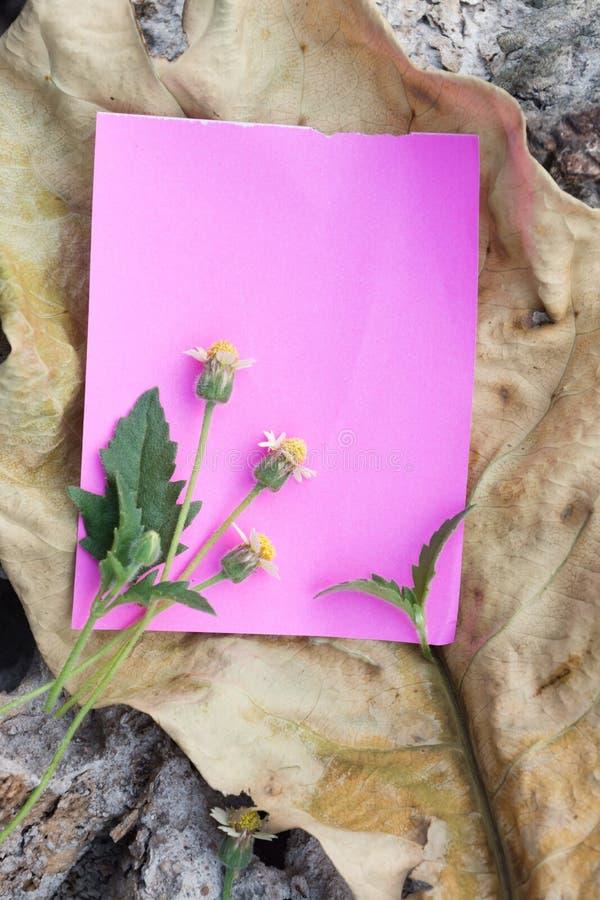 Papierowa notatka na suchym drewnie obraz royalty free