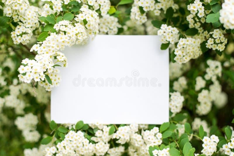 Papierowej karty Mockup na białych kwiatach Lata t?o z kopii przestrzeni? zdjęcie royalty free