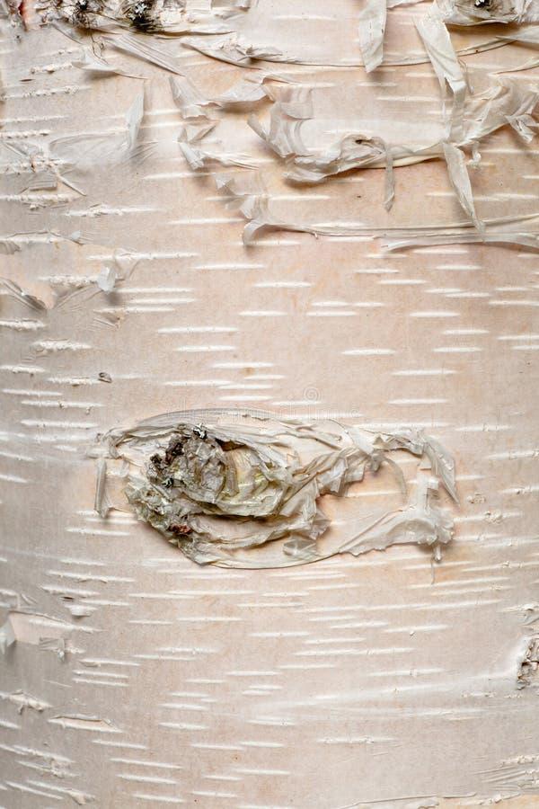 Papierowy brzozy Betula neoalaskana barkentyny tło zdjęcia stock