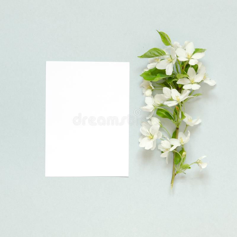 Papierowy puste miejsce, lato świezi kwiaty na błękitnym tle Mockup na widok zdjęcie royalty free