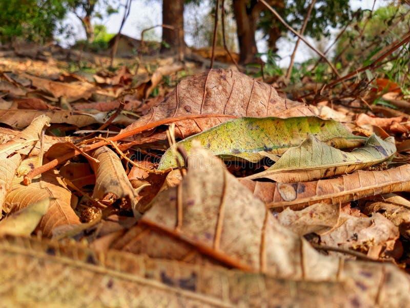Papiers peints courants de feuilles images stock