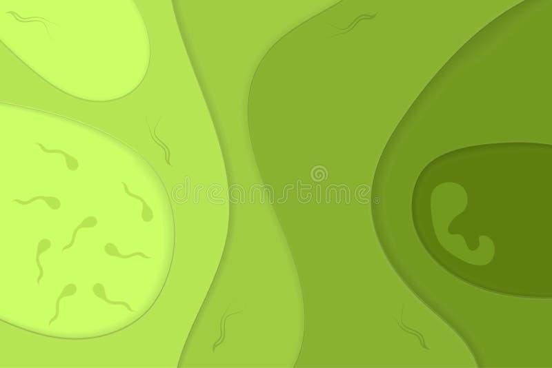 Papieru ci?cia zieleni t?o Plemniki i płód ilustracja ilustracja wektor