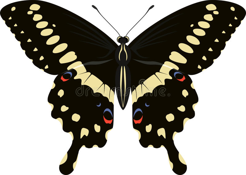 Papilio-lormieri Schmetterlings-Vektorillustration lizenzfreie abbildung
