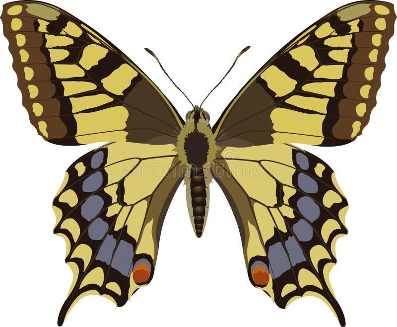 Download Papilio machaon vector illustratie. Illustratie bestaande uit vlinder - 280193