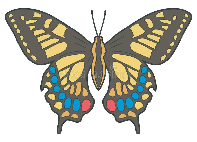 `Papilio Machaon` or `Old World Swallowtail`  butterfly accurate vector illustration. Drawing vector illustration