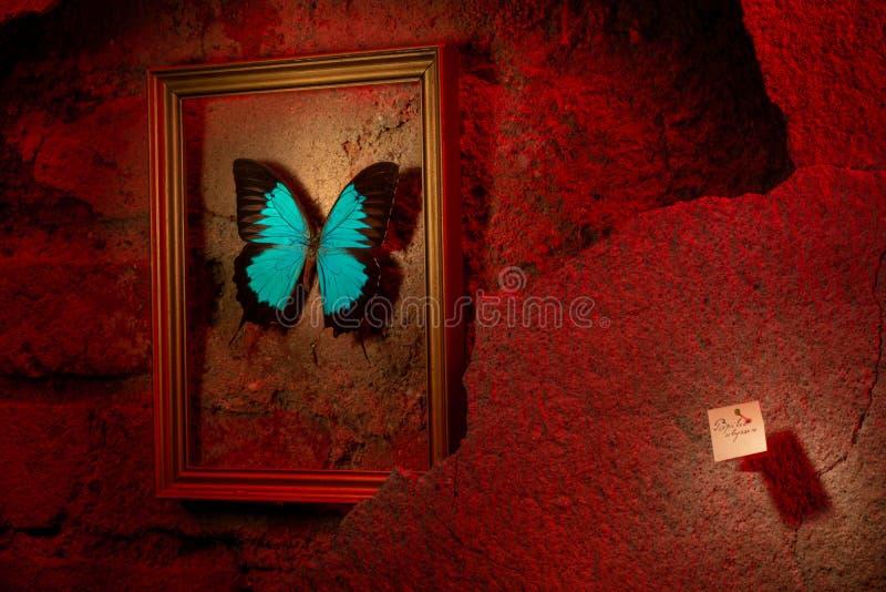 Papilio ulysses в рамке золота на красной стене стоковая фотография rf