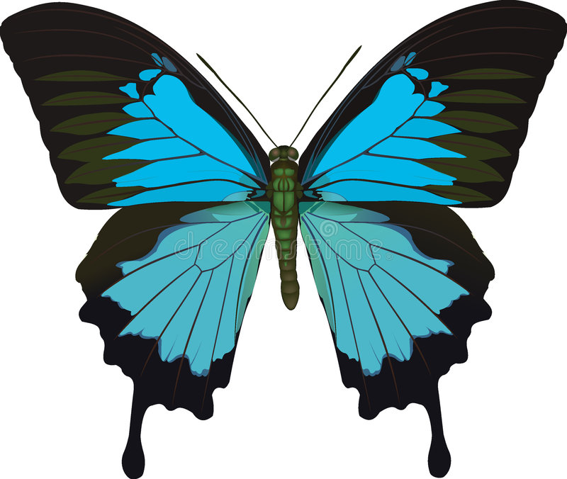 Papilio ulysses royalty free illustration