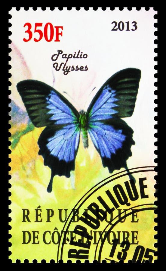 Papilio Ulysses, fjärilsserie, circa 2013 vektor illustrationer