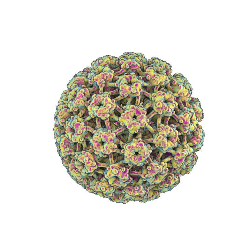 Papillomaviruses humanos isolados no fundo branco ilustração do vetor