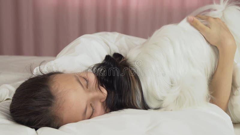 Papillon狗在床上醒来青少年的女孩 库存图片