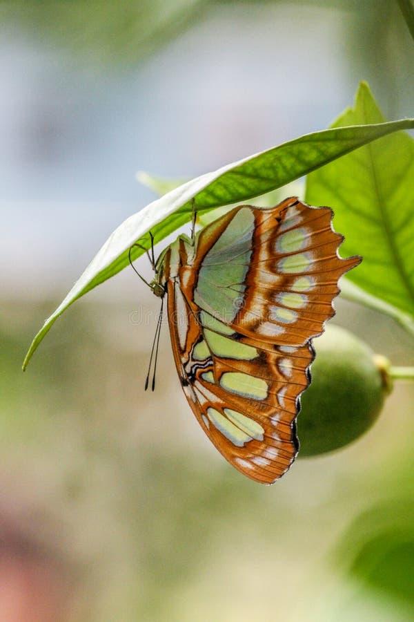 Papillon à l'envers photographie stock