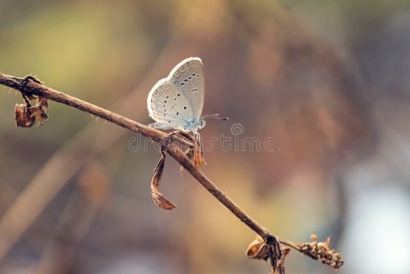 Papillon été perché sur dessus de la branche photos libres de droits