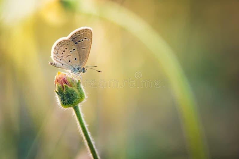Papillon été perché sur dessus de la branche image stock