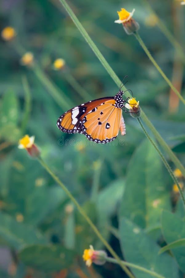 Papillon été perché sur dessus de la branche photo libre de droits